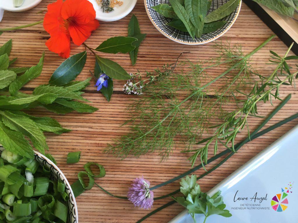 herbes aromatiques de printemps